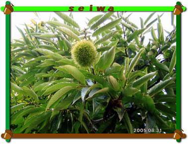 2005_08_001